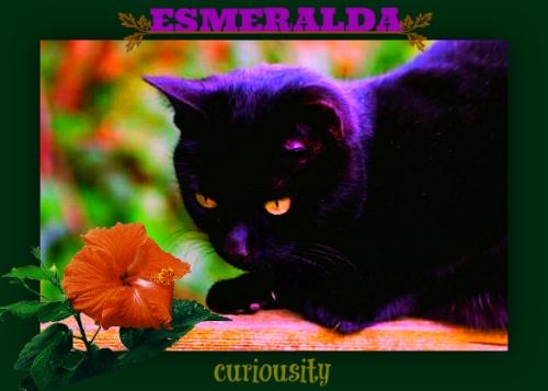 EsmeraldaCuriousDeepestRed3